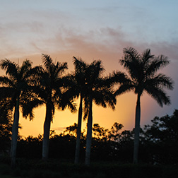 South Florida Sunset